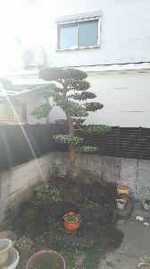大阪南部のお知り合い...♪ おはようございます。 textreamは今年末までですが、 FX、為替全般は無くならないので 試験的