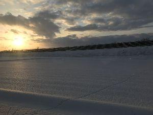 A型 大寒過ぎて これから寒さ、本番とか。 お元気ですか? 一昨日から秋田に来ています。 久しぶりに見る雪