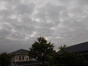 ★愛知・岐阜・三重、60代限定★ おはよう~~  今日から8月 これからが本格的な夏  そして蒸し暑い朝 今は5時半だがやかましい も