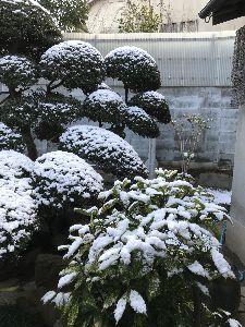 今年定年を迎えます おはようございます。  朝起きてカーテンを開けると!!!  > あさやんは、何で春の訪れを感じ
