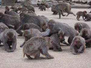諦めなきゃだめかな。。。 落ち込まないで頑張ってください。写真のように猿だって、頑張ってます。