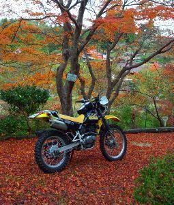 山口県東部 ツーリング takeさんはじめまして 角島いつ行ってもいいですよね 書き込みと言わずに一緒にチョイノリしましょう