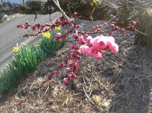 ***小さなしあわせ***  おはようございます。(^^♪   花冷えの 今日この頃です。  でも、春は、・・・・・・・  確実