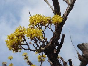 ***小さなしあわせ***      黄色の花では、       名前は、忘れたけど、・・・           こんな花も、咲