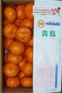 7296 - (株)エフ・シー・シー 本日、三ヶ日みかん 青島 到着致しました。   *優・Lサイズ・5Kg です。  どうも有り難う御座
