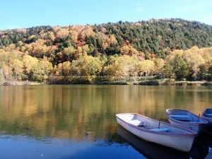 さみしんぼさん お昼になぜか画像にアクセスできなかったぁ💦  紅葉した木々が水面に映り込んで綺麗だったよ 落ち葉で地