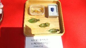 パワースポット・寺社巡り・御朱印集め仲間募集 in 関西 追伸:珍しい椿の葉と銀杏です。 椿葉はしっぽが付いていて金魚に似ています。 葉付銀杏です。 青の色を
