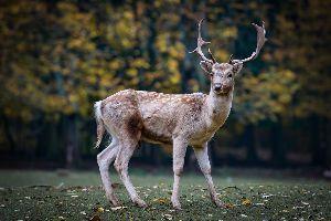 一言吐露したい 奈良の観光地内の鹿が増加し過ぎたので、まぶきねばならぬとか。 仕方ないでしょう、公園半分ほどの鹿の数