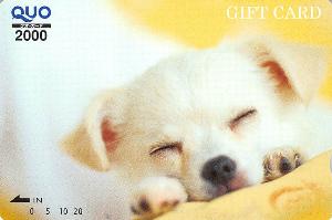 8700 - 丸八証券(株) 【 株主優待 到着 】 (100株 3年以上) 2,000円QUOカード  ※GIFT CARD -