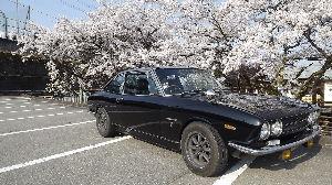 117coupeは好きですか? 遅くなりましたが先週土曜日高山祭のTV放送での桜がきれいだったので行ってきました。快適な季節をしっか