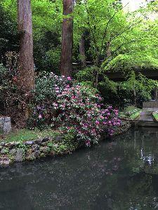 写真仲間を作りましょう こんばんは。  きょうはカミさんの厄除け祈願のため、滋賀県の田村神社へ行ってきました。 境内にシャク