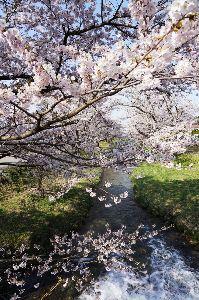 写真仲間を作りましょう こんにちは。  土日は庭仕事、バラの開花を待つ庭はすっかり綺麗になりました。が・・2日続いた庭仕事、