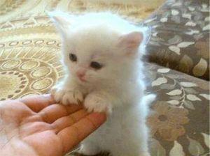 野良猫ゼロ社会 みんなで、かわいい子猫の写真を貼りましょう❗❗❗
