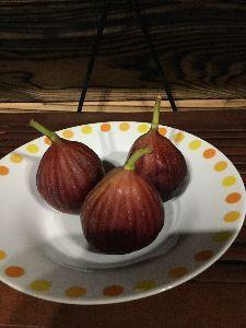 wanの一人言 こんばんは(^^) スキャルは 最近やらない。 体力がもたないから。  昔 植えたイチジクの木に