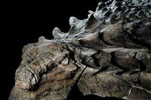 好きに書き込もう、タイガースファン限定 「A Dinosaur Mummy」  Mummy=木乃伊。 生物の体が、水分を失い、しかし腐敗せず