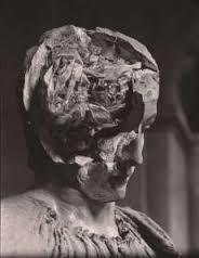 生滅するトピック いったいナマコさんの脳内ってどういう構造なの?