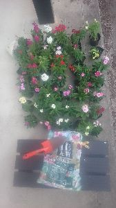 (・ω・;)(;・ω・)愛いずこ こんばんは  な、な、なぎさん  一日中、花壇、花苗、植え替え  @66x48本=3200円、出費で