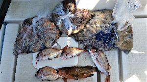 7990 - グローブライド(株) 今年はタコも豊漁の様ですねっ♪ 私もハマってます><♪  3人で20kg以上GET♪♪
