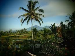 新 A☆CEの作れた~独り言 >バリ島で大きな葉っぱのうちわで扇いでもらいながら >アロマオイルとか塗ってほしい〜。 >すげー復活
