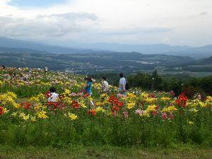 76歳の終活? ※            彦さん  隆さん 今晩は。        日本全国夏祭りの季節到来です、我