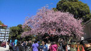 76歳の終活? ・彦さん 花豆さん こんにちは   今日の千葉は初夏を思わせるような陽気で、日中の気温は20度を越し