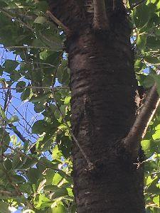 聖蹟桜ヶ丘のトピックをもう一度 蝉が鳴いていました。