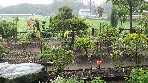 未熟なんです (ノ_・。) おはようございます‼  ガーデニングというわけでもありませんが、以前は畑で ご多分にもれず野菜を作っ