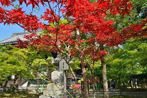 初めまして( ´ ▽ ` )ノ こんばんわ!  鞍馬寺から~貴船神社までの 山越えは体力いりますね 経験しました    真如堂の現在