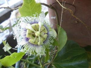 花、いいね。 おはようございます。  まりもさん  お暑うございます。 毎日、毎日,断捨離のための片付けに追われて