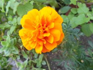 花、いいね。 こんにちは。  いよいよ夏の到来、太陽がギラギラと照りつけていて、 外にはとても出られない陽気です。