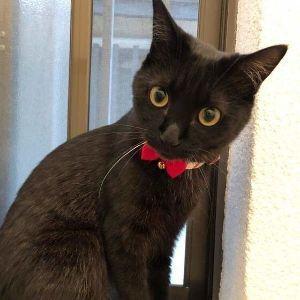 ワンコ・ニャンコ好きな方集まれ~~♪ こんにちは(^ν^) これも姉の猫ちゃんです