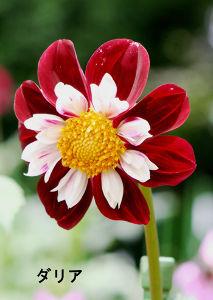 国際宇宙船ISS ISS見えるまで気分転換で神代植物公園で写した花の写真を載せました。