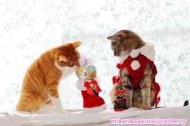 猫 ねこ ネコ ねこや ギャラリーで絵画・生ネコ・甘味も楽しもう メリ~~~~♫
