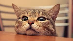 猫 ねこ ネコ ねこや ギャラリーで絵画・生ネコ・甘味も楽しもう ハッピョー~~~~~~♫  予想・・・オッケー 増配・・・オッケィ~~~~♫  設備トーシ・・・チャ