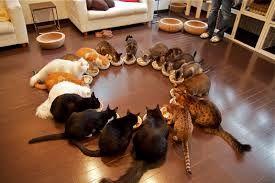 猫 ねこ ネコ ねこや ギャラリーで絵画・生ネコ・甘味も楽しもう うん そうする~~~♪  ありがと!!