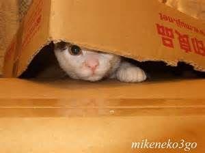 猫 ねこ ネコ ねこや ギャラリーで絵画・生ネコ・甘味も楽しもう まぁ だだよ~~~~♫