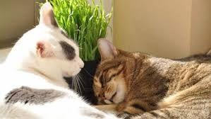 猫 ねこ ネコ ねこや ギャラリーで絵画・生ネコ・甘味も楽しもう ぼ~~~~~っ・・・と