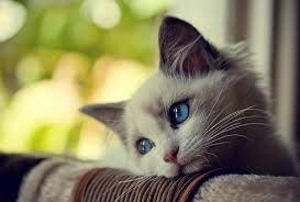 猫 ねこ ネコ ねこや ギャラリーで絵画・生ネコ・甘味も楽しもう シサク ライン での・・・・・ サンプル を ・・・・・・・