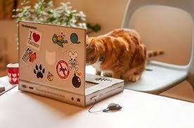 猫 ねこ ネコ ねこや ギャラリーで絵画・生ネコ・甘味も楽しもう なにか・・・・ あった の・・・???? なかった の・・・???