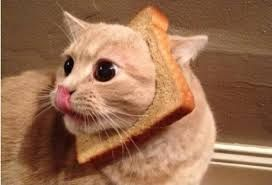 猫 ねこ ネコ ねこや ギャラリーで絵画・生ネコ・甘味も楽しもう ナデナデ して・・・・ コーシ しますた・・・・ サン・ピッ・ピー~~~~♫