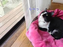 猫 ねこ ネコ ねこや ギャラリーで絵画・生ネコ・甘味も楽しもう どこ に 上がったの ・・・・・