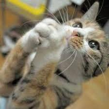 猫 ねこ ネコ ねこや ギャラリーで絵画・生ネコ・甘味も楽しもう 今日は静かに祈ろう・・・・ 上を向いて・・・