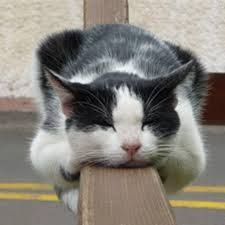 猫 ねこ ネコ ねこや ギャラリーで絵画・生ネコ・甘味も楽しもう まいど~~~♪