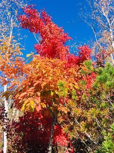 Practical English Usage  > Changing leaves are awesome...