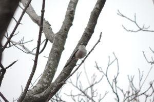 野鳥見ながら 写真撮りに・・・・      いっものピンボケ・・