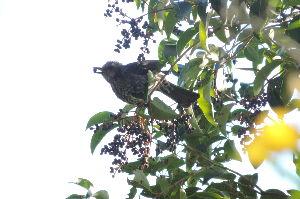 野鳥見ながら 写真撮りに・・・・       又 また ピンボケ・・