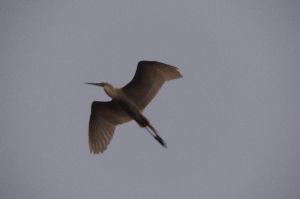 野鳥見ながら 写真撮りに・・・・       昨日の ピンボケ・・