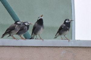 野鳥見ながら 写真撮りに・・・・       ひどい ピンボケだけど・・・