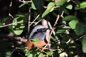 野鳥見ながら 写真撮りに・・・・       いっもの ピンボケ・・・