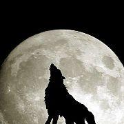 銀狼(デイトレ)